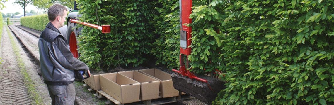 Plantes de haies 'xxl grande taille' 'prêt à planter'