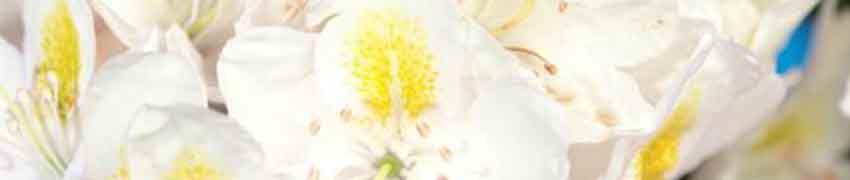 Votre Rhododendron, sa plantation
